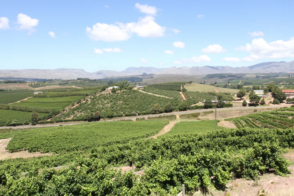 Wallovale Vineyards - © image by Paul Wallace Wines